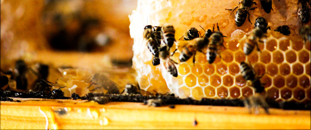 Value of the honey bee