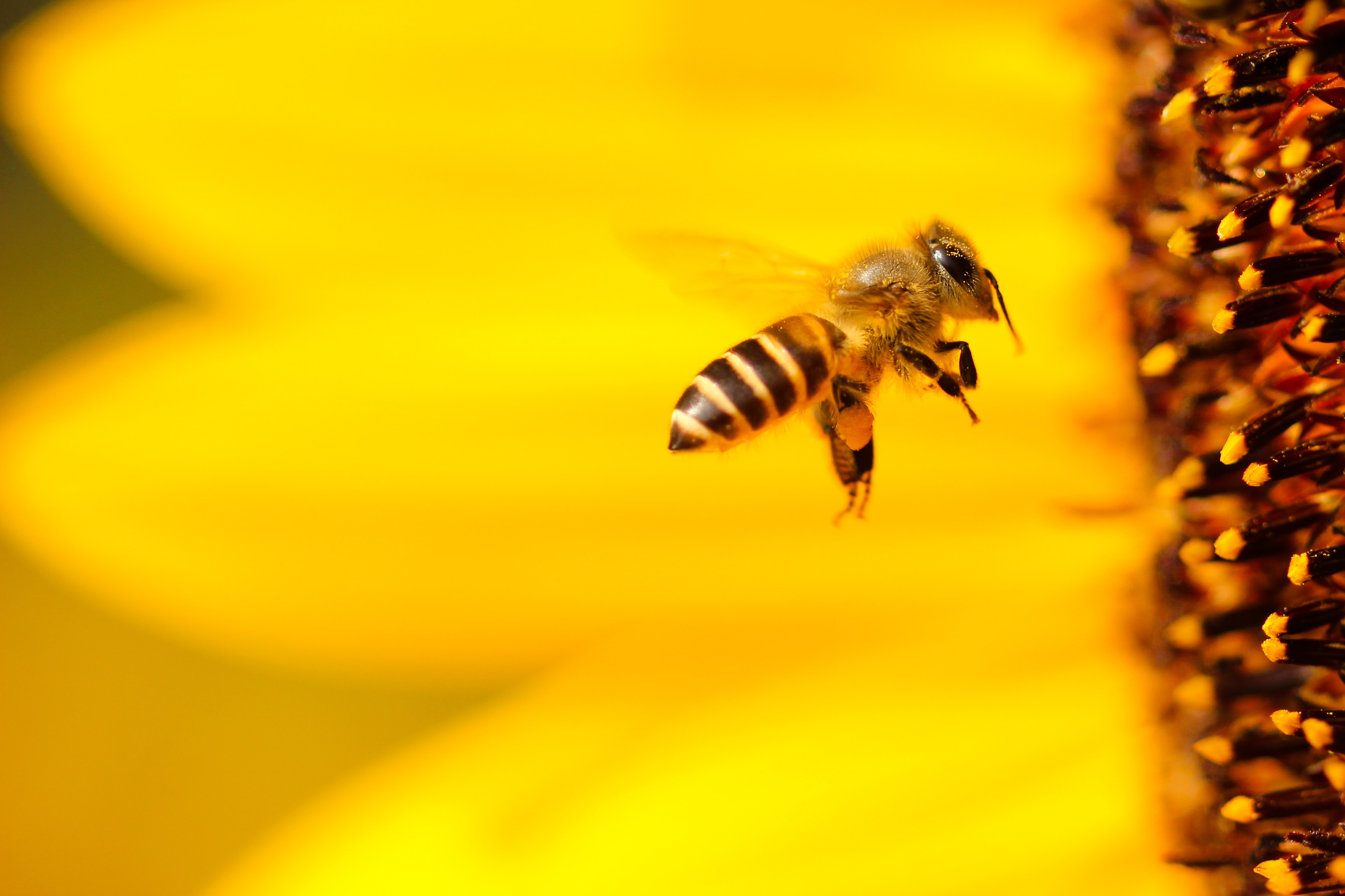 10 Facts about Honey Bees