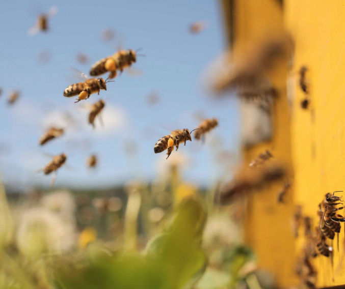 WATCH: Bees Hatching