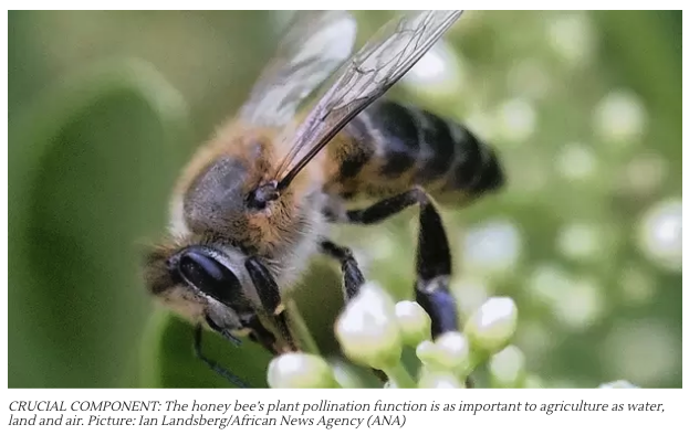 Plan launched to save Western Cape bee population