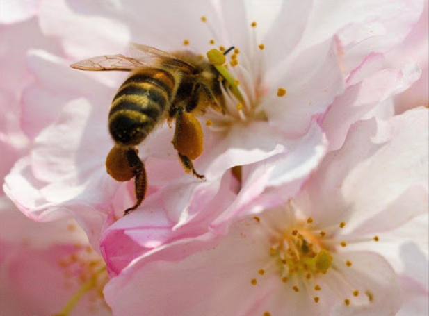 Can bees do maths? Yes – they can!