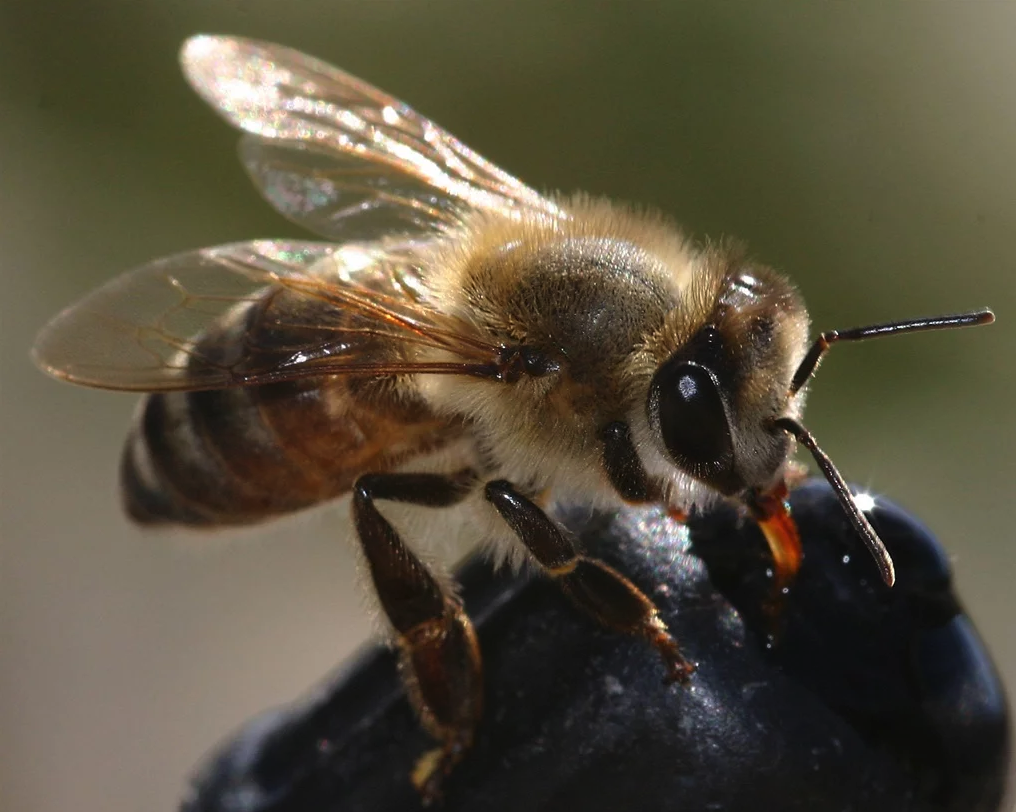 World seeing 'catastrophic collapse' of insects.