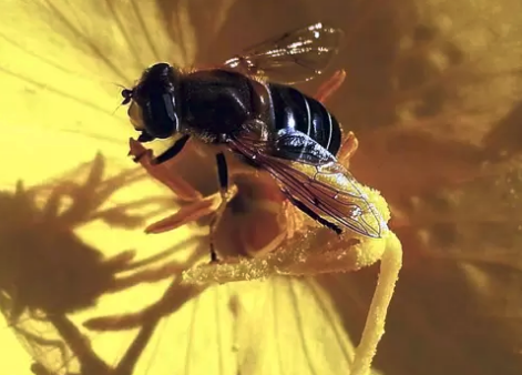 Breaking new ground by tracking pollen from A to Bee